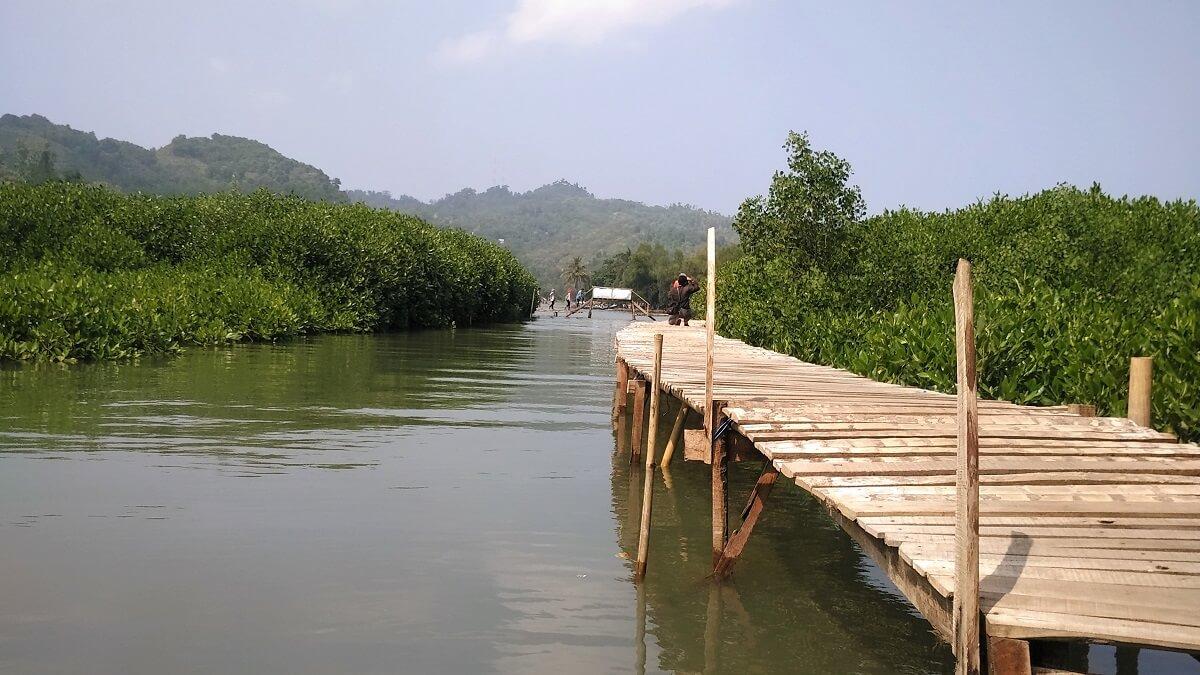 30 Pemandangan Cantik Hutan Mangrove Ayah Kebumen Infokebumen View Menarik