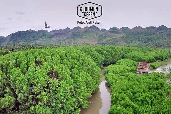 Berita Hutan Mangrove Ayah Jadi Wisata Edukasi Logending Kab Kebumen