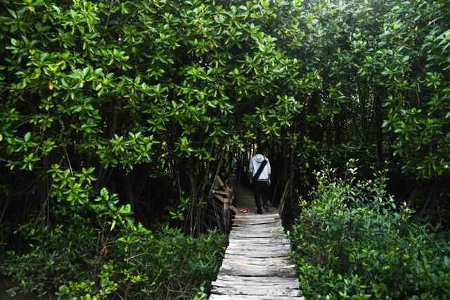 Hutan Mangrove Ayah Kebumen Https Www Atmosferku Logending Kab