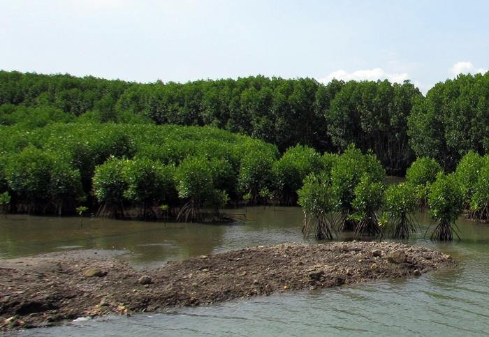 Hutan Mangrove Kebumen 40 Hektare Berita Logending Kab