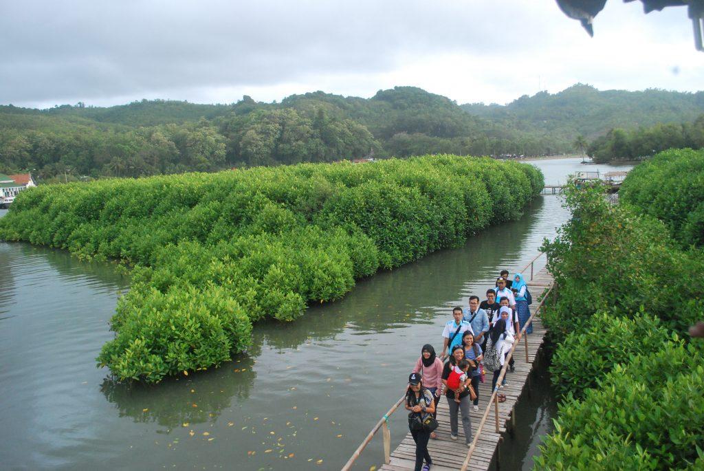Hutan Mangrove Logending Wisata Alam Kebumen Menyewa Perahu Pengunjung Diajak