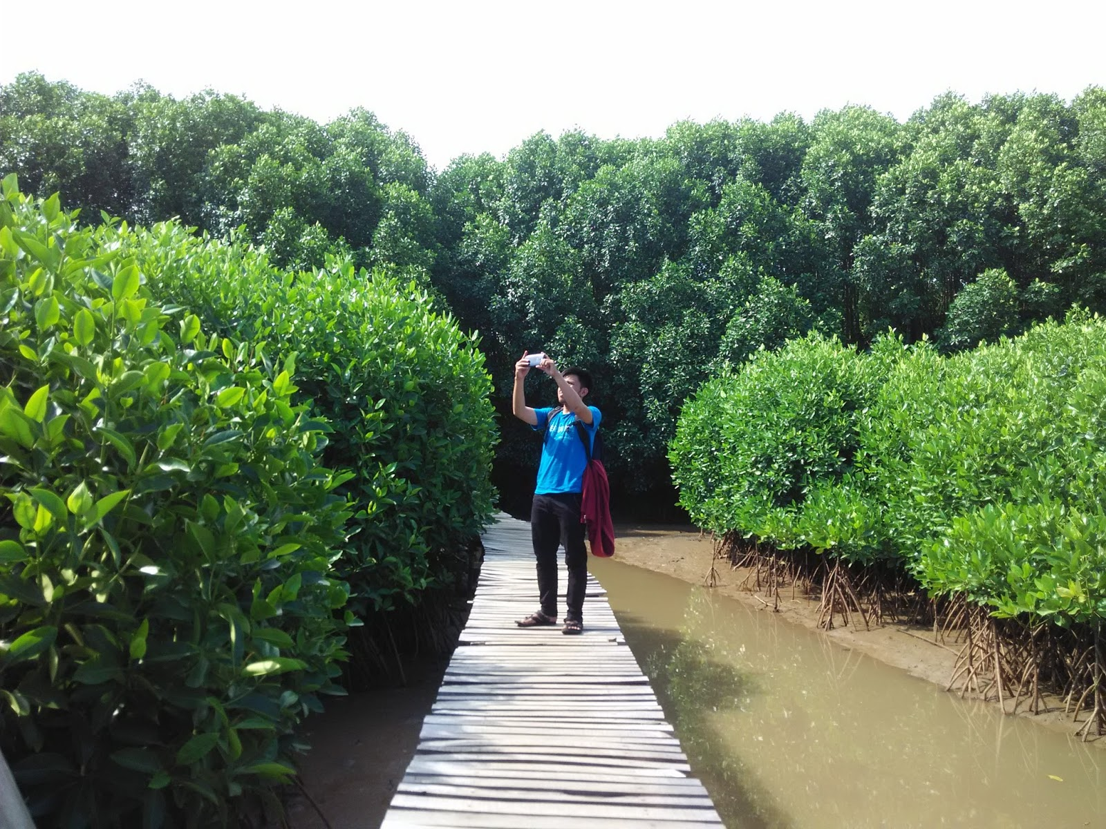 Hutan Mangrove Pantai Ayah Kebumen Adem Charis Fuadi Pengikisan Oleh