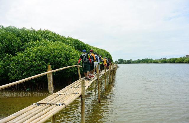 Jembatan Bambu Trekking Mangrove Pantai Congot Kulon Progo Menikmati Waktu
