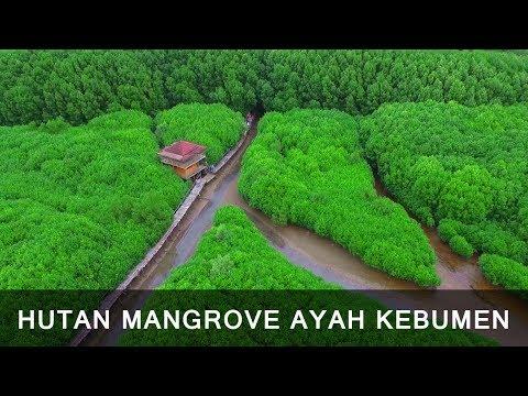 Keindahan Hutan Mangrove Ayah Kebumen Vlog Ngapak Drone View Logending