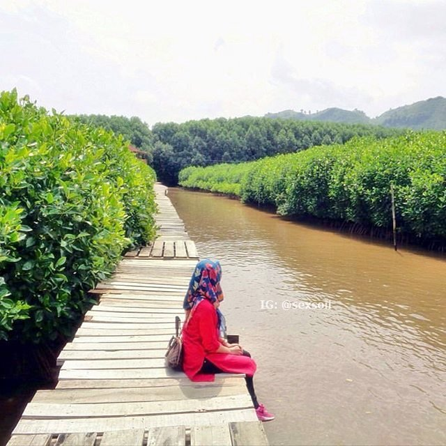 Lintas Kebumen Twitter Photo Menikmati Rapat Indahnya Hutan Mangrove Logending