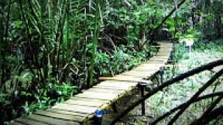 Lokasi Wisata Hutan Mangrove Pantai Logending Ayah Kebumen Kab
