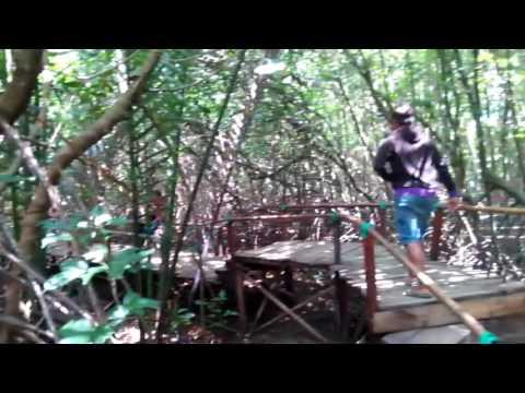Melintasi Hutan Mangrove Bakau Ayah Kebumen Youtube Logending Kab
