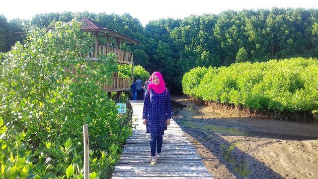 Pantai Ayah Indah Terlengkap Kebumen Foto Hutan Mangrove Logending Kab