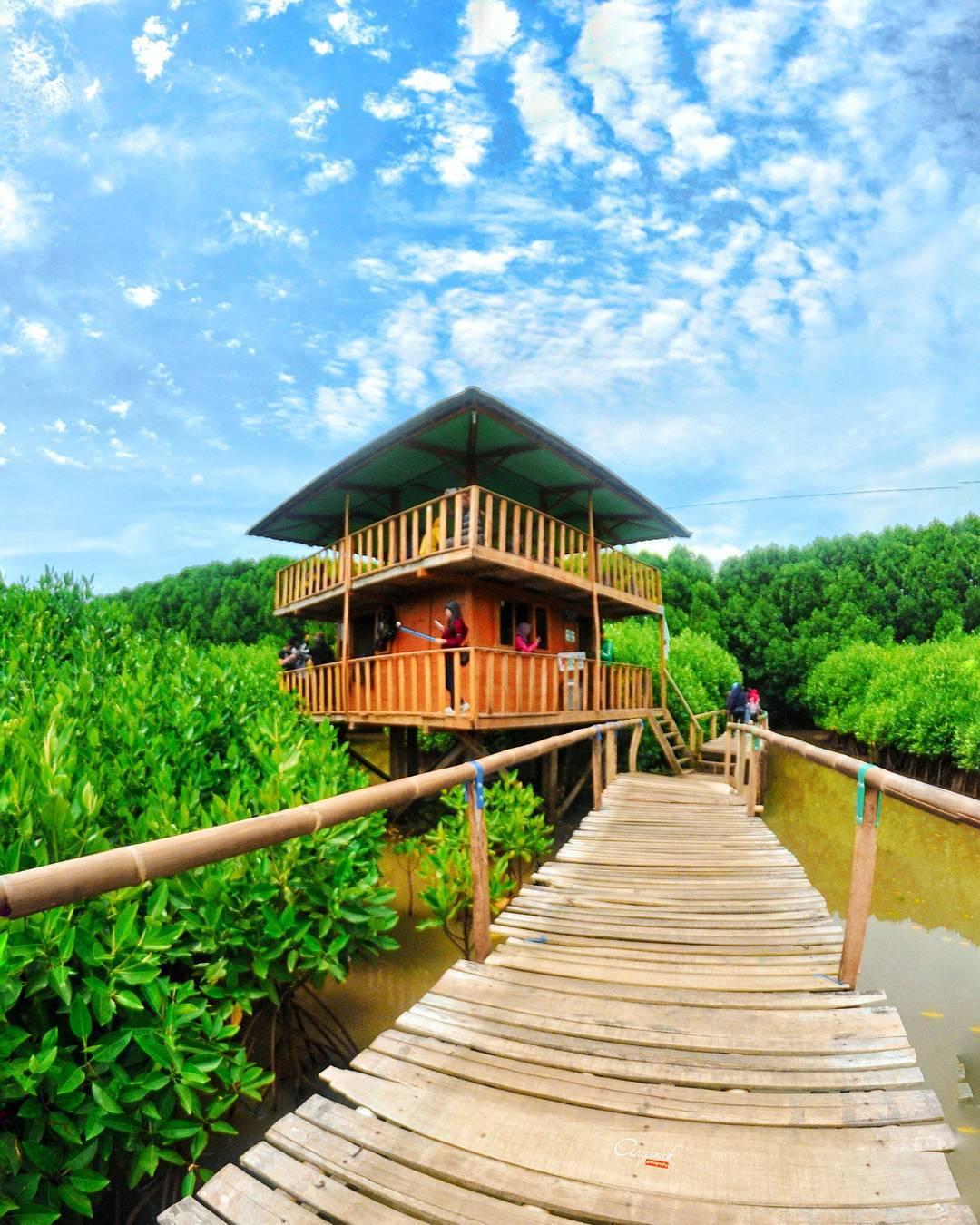 Pantai Logending Menikmati Indahnya Laut Selatan Rimbunya Hutan Mangrove Kab