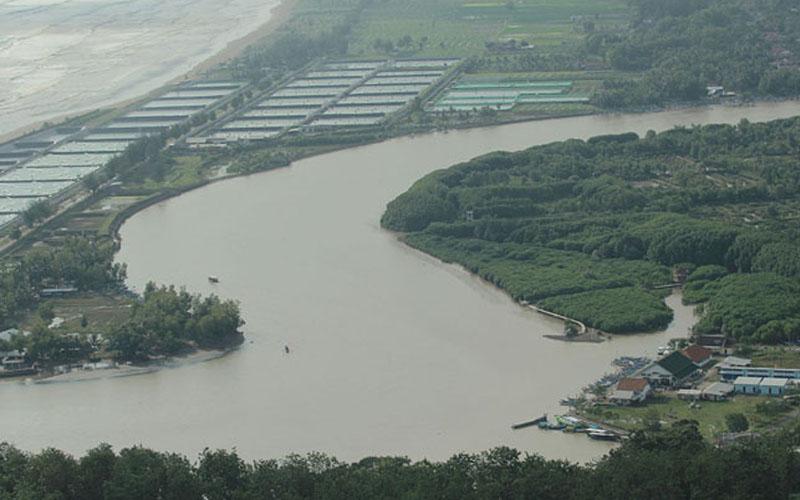 Pemkab Kebumen Alokasikan Rp 3 8 Miliar Hutan Mangrove Logending