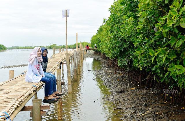 Pesona Wisata Kawasan Hutan Mangrove Kebumen Travel Story Perlu Dikembangkan