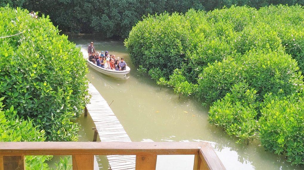 Pilihan Tempat Wisata Kebumen Ngehits Terindah Hutan Mangrove Logending Kab