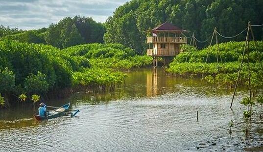 Punya Potensi Wisata Hutan Mangrove Pantai Logending Jadi Persoalan Sportourism