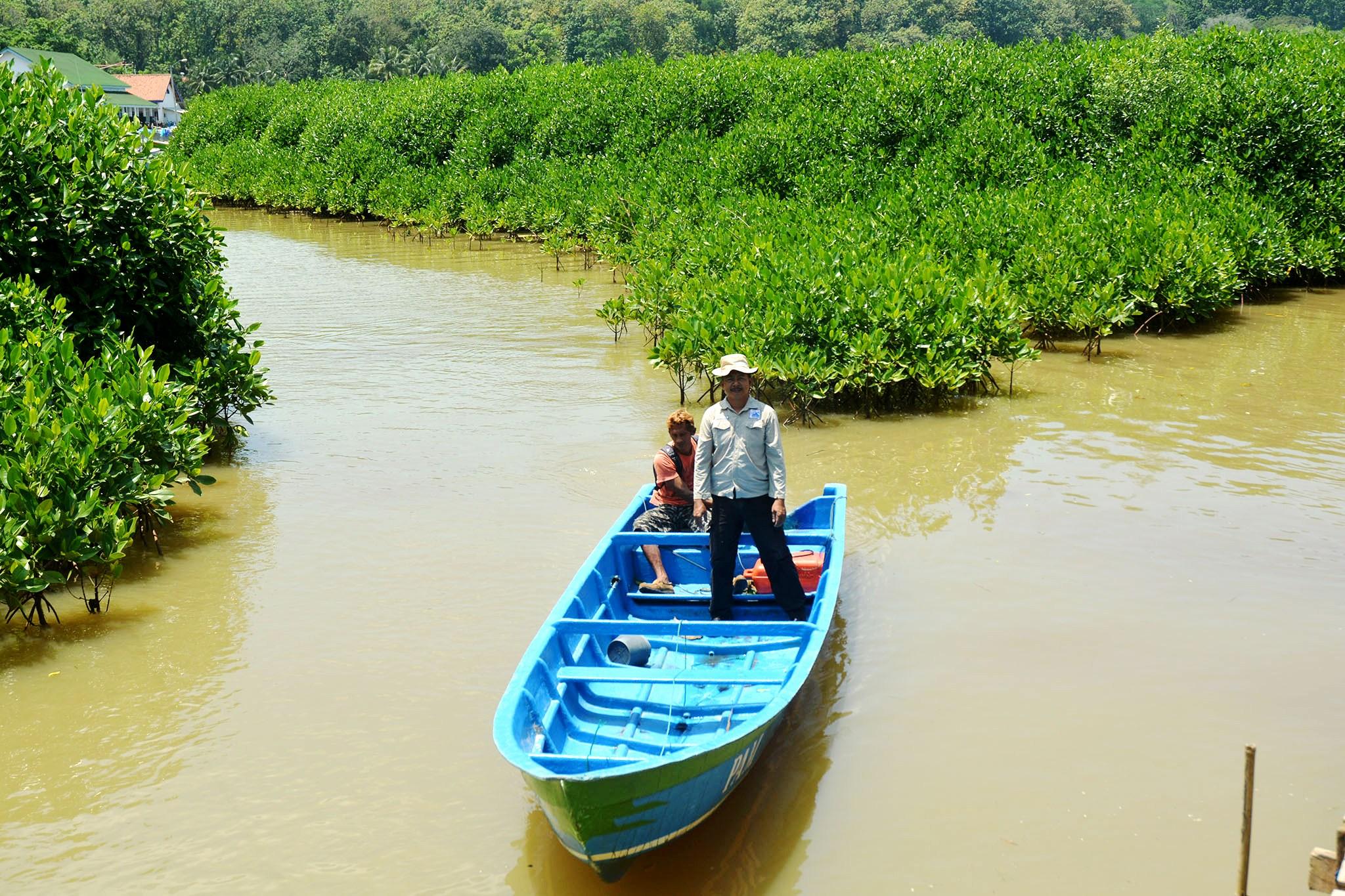 Sukamsi Pendekar Mangrove Kebumen Mongabay Id Kawasan Hitan Berada Disekitar
