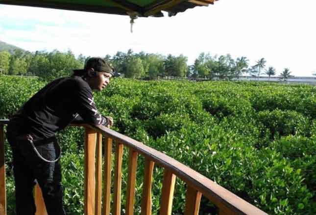 Tempat Wisata Kebumen Terbaru 2018 17 Menarik Hutan Mangrove Logending