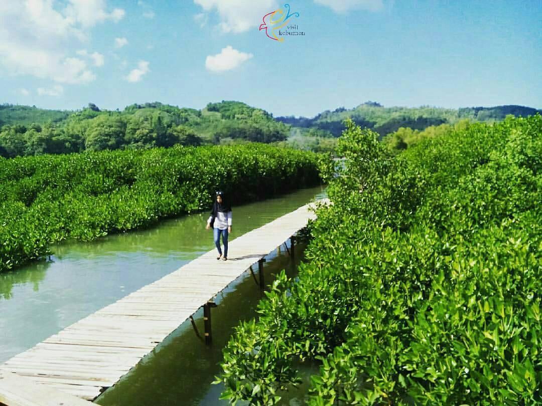 Visit Kebumen Visitkebumen Instagram Photos Videos Jogging Track Hutan Mangrove
