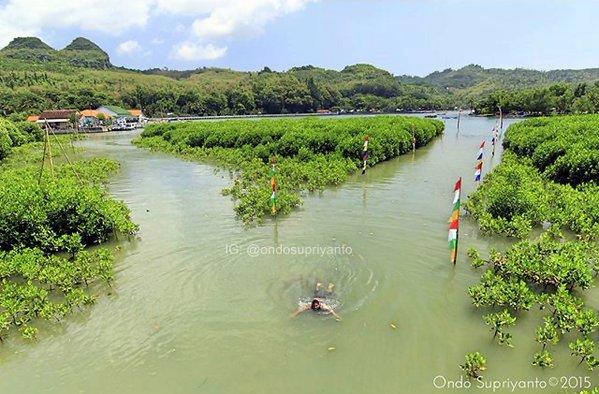 Wisata Alam Indonesia Hutan Mangrove Pantai Logending Sekda Kebumen Adi