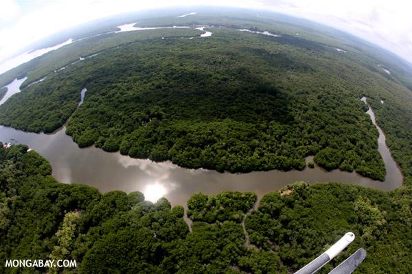 Wisata Hutan Mangrove Pantai Ayah Kebumen Lokasi Jembangan Alam Desa