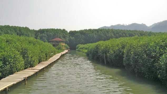 Wisata Mangrove Kebumen Hutan Desa Ayah Kecamatan Kabupaten Logending Kab