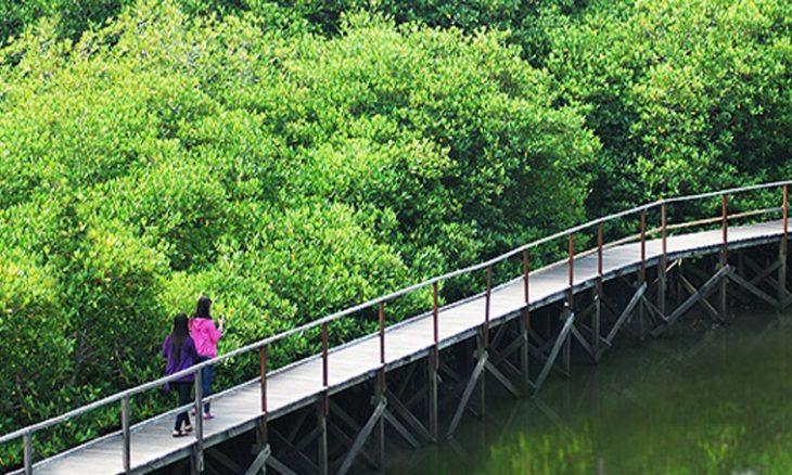 Wisata Mangrove Kebumen Mempesona Okemania Tahukah Ternyata Memiliki Tempat Bernuansa