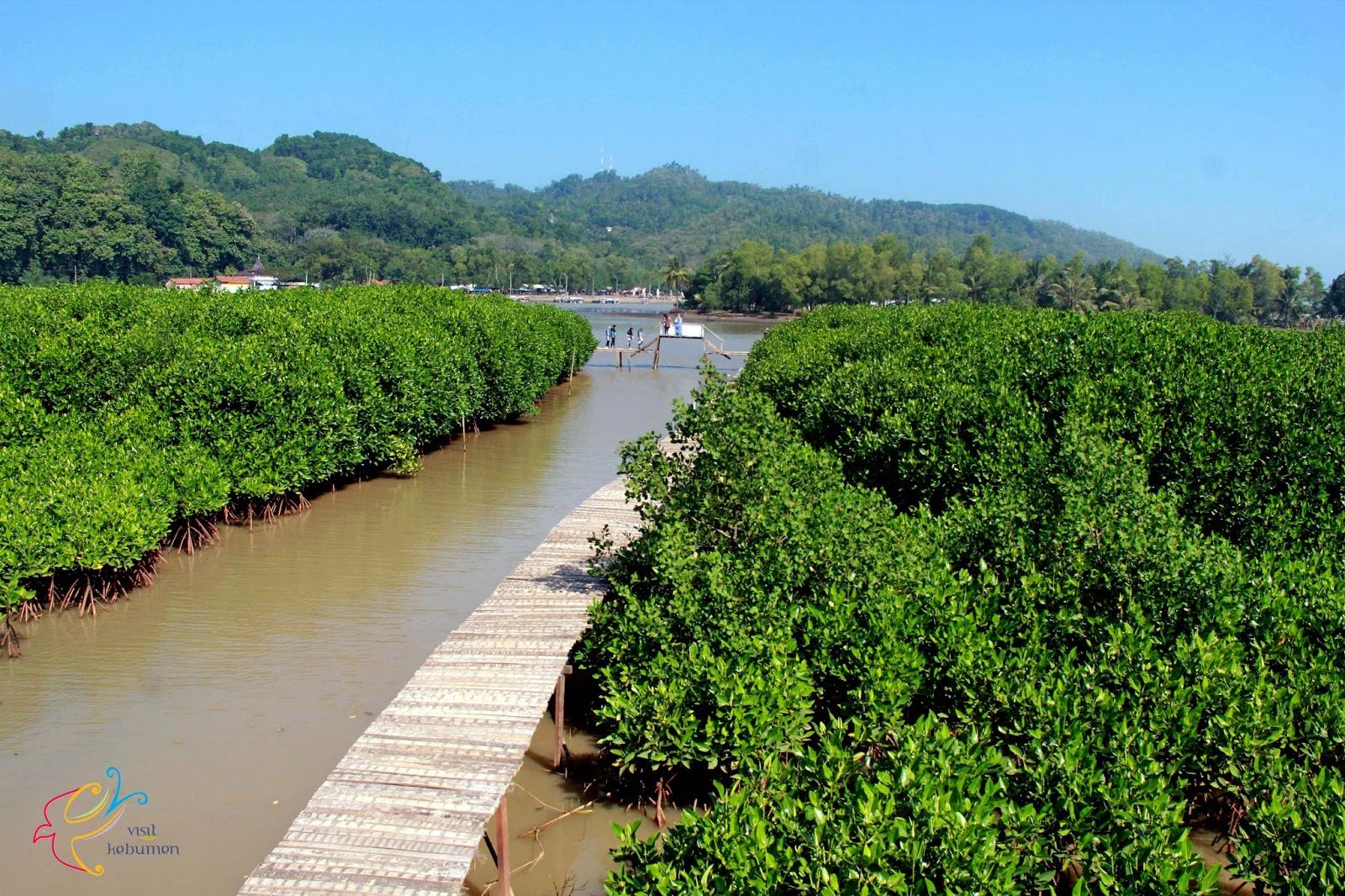 Wisata Mangrove Logending Ayah Kebumen Visit Hutan Kab