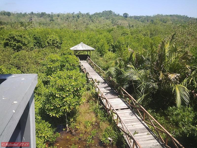Wisata Mangrove Page 2 Hutan Kampung Laut Cilacap Logending Kab