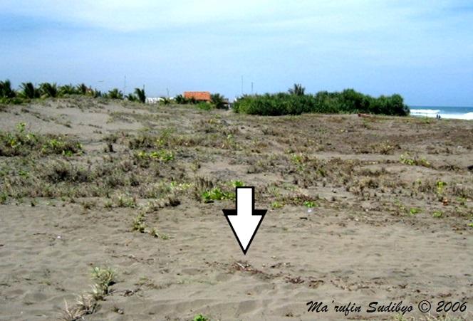 Kebumen Ekliptika Pantai Petanahan Karanggadung Contoh Datar Kabupaten Bocor Kab