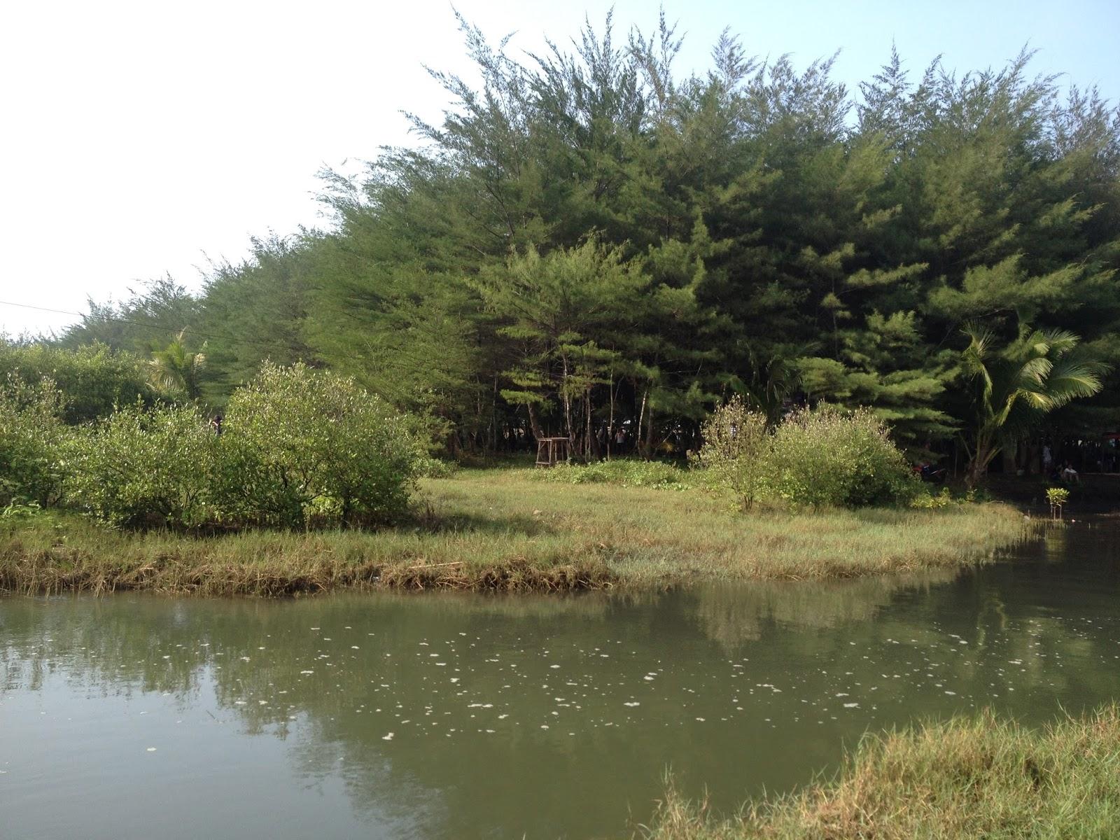 Cerita Seputar Kebumen Pantai Lembupurwo Sensasi Laguna Gumuk Cemara Udang