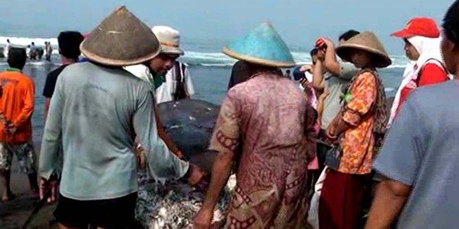 Paus 8 Ton Sepanjang 22 Meter Terdampar Pantai Kebumen Merdeka