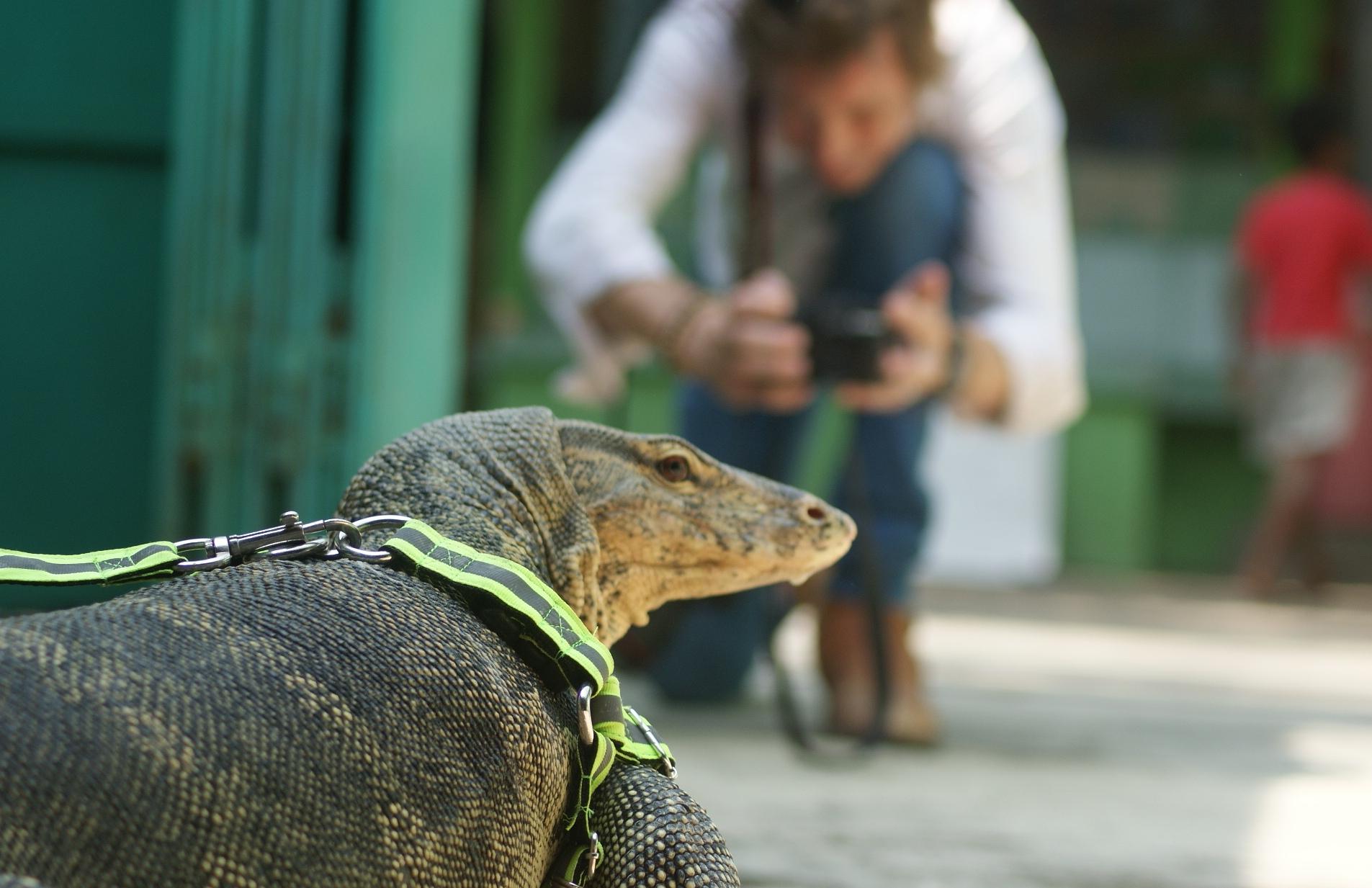 Berbagi Ceria Taman Reptil Tara Kebumen Infokebumen Kab