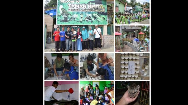 Kitabisa Bantu Taman Reptil Adiluhur Lestarikan Satwa Liar Kab Kebumen