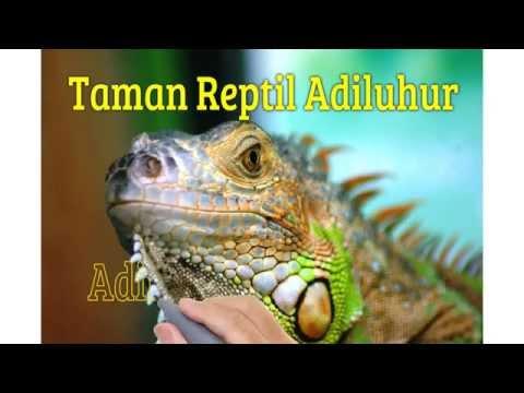 Pariwisata Taman Reptil Kab Kebumen