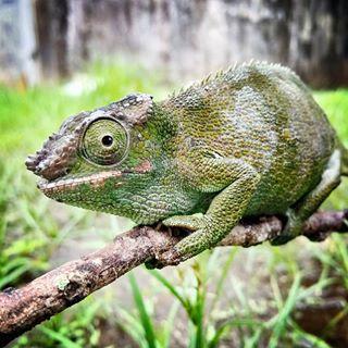Taman Reptil Adiluhur Tamanreptiladiluhur Instagram Photos 5 Months Kab Kebumen