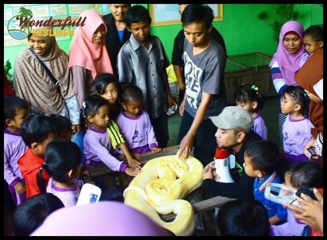 Taman Reptil Adiluhur Tara Adimulyo Kebumen Sensasi Berinteraksi Jenis Ular