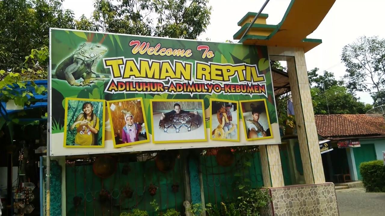 Wisata Taman Reptil Adiluhur Kebumen Youtube Kab