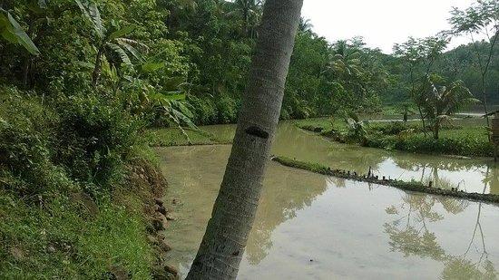 Side Jembangan Picture Wisata Alam Kebumen Kab