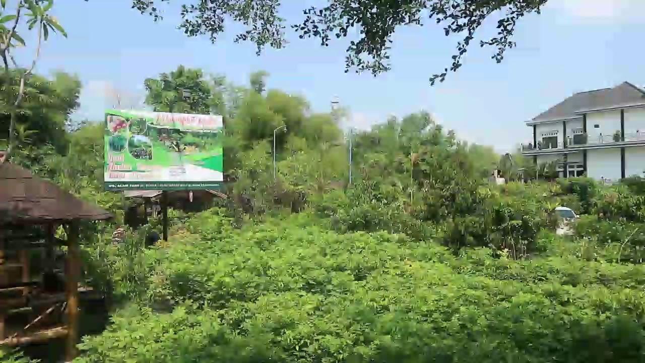 Wisata Edukasi Desa Jambu Kec Kayen Kidul Kab Kediri Youtube