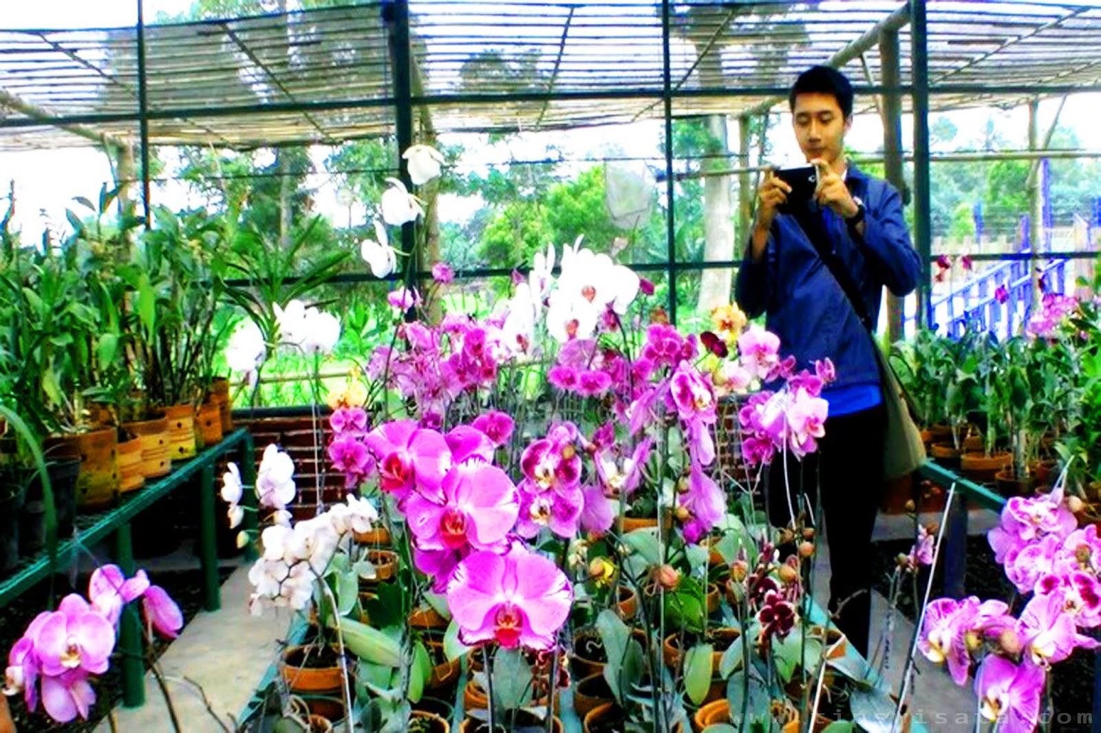 Anggrek Kediri Warna Warni Cantiknya Bunga Kampung Kab