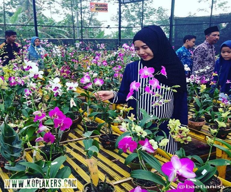 Anggrek Wisata Cantik Lereng Gunung Kelud Kabupaten Kediri Kampung Kab