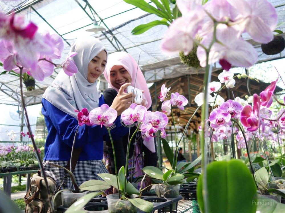 Cantik Kampung Anggrek Kediri Panduaji Net Foto Greenhouse Kab
