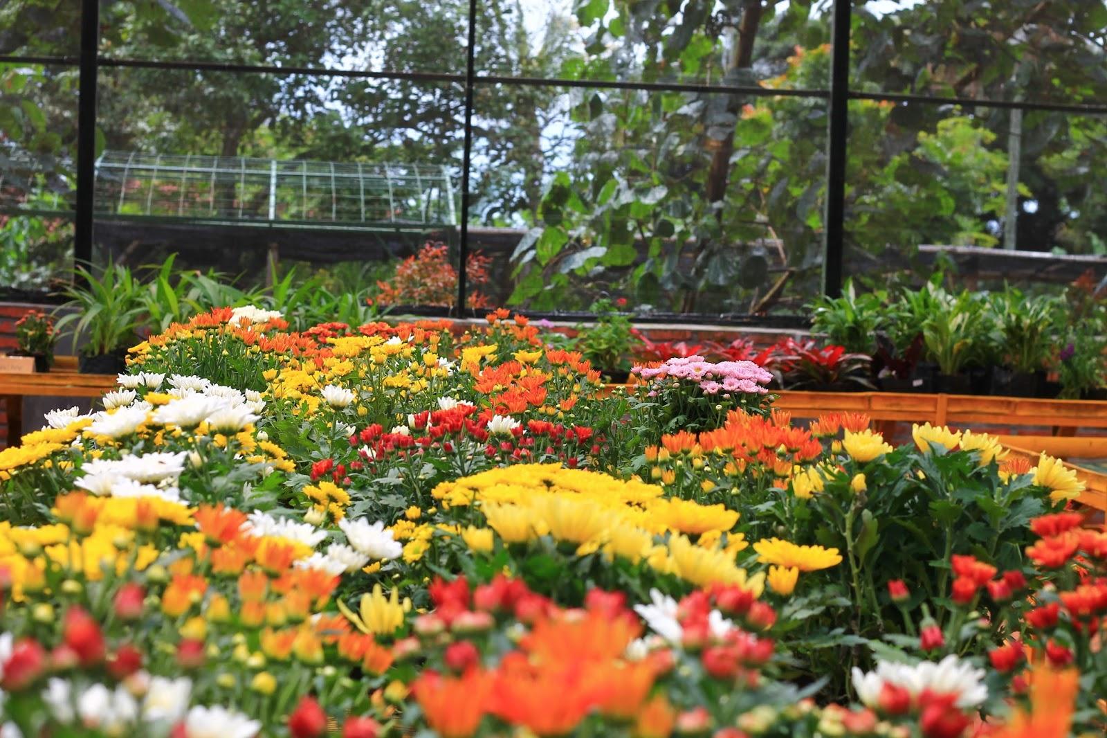 Cantiknya Warna Warni Bunga Wisata Kampoeng Anggrek Kediri Kampung Sendiri