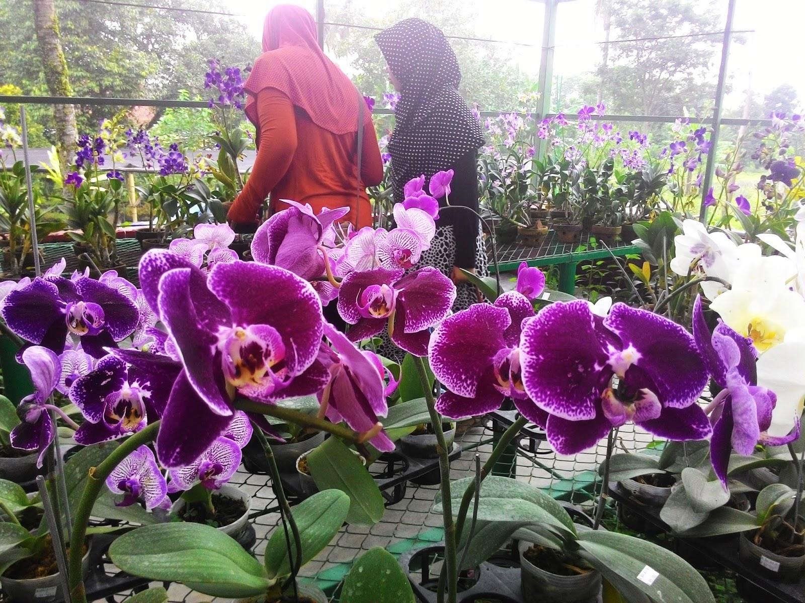 Daily Notes Wisata Kampung Anggrek Kabupaten Kediri Candid Kab
