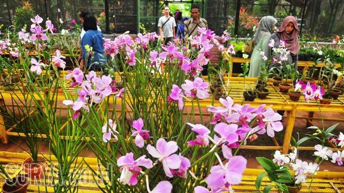 Kampoeng Anggrek Kediri Nikmati Pesona Bunga Eksotis Sekaligus Memborongnya Harga