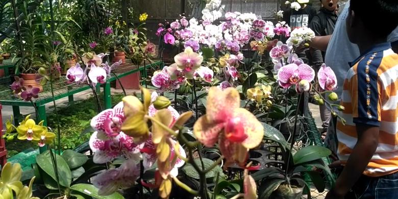 Kampoeng Anggrek Kediri Wisata Bunga Bikin Berbunga Koleksi Jawa Timur