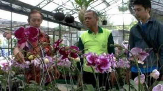 Kampung Anggrek Kediri Indonesia Review Tripadvisor Kab