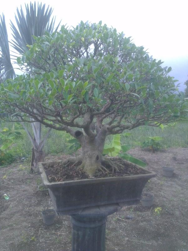 Update Terbaru Kampung Anggrek Kabupaten Kediri Informasi Kemarin Waktu Lebaran