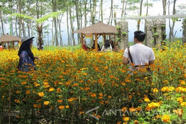 Pemkab Kediri Kembangkan Taman Bunga Kelud Antara News Jawa Timur