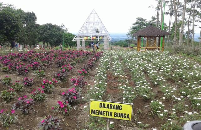 Taman Bunga Destinasi Wisata Gunung Kelud Cendana News Dewi Kilisuci