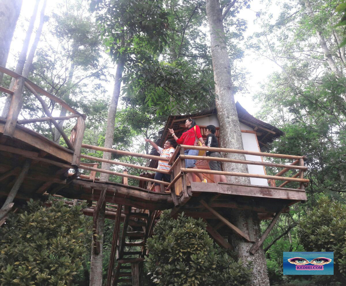 Resort Kelir Kediri Tempat Wisata Tengah Hutan Matakediri Kabupaten Terletak