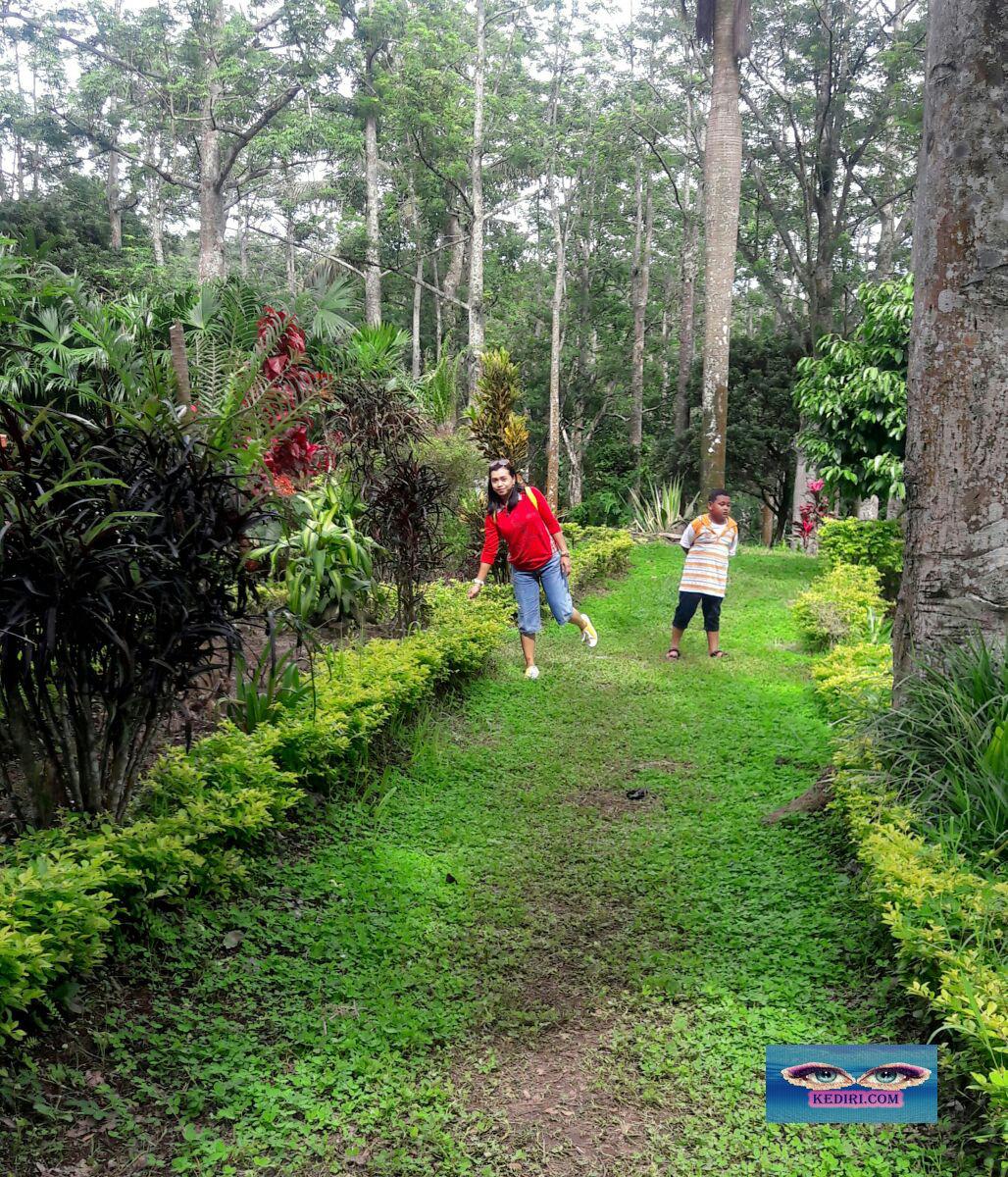 Resort Kelir Kediri Tempat Wisata Tengah Hutan Menurut Beliau Taman